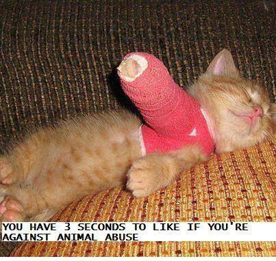 animal abuse awareness