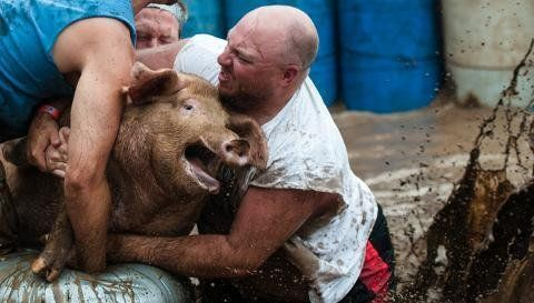 Petition · Grant County 4 H Fair, Marion Animal Care and Control, County Council: Stop the terrifying event of Pig Wrestling in Grant County, Indiana · Change.org