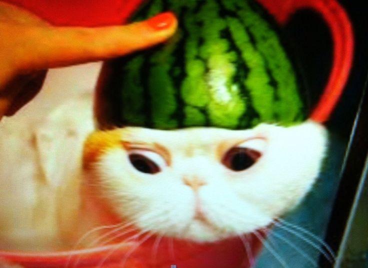 Watermelon cat. :0.