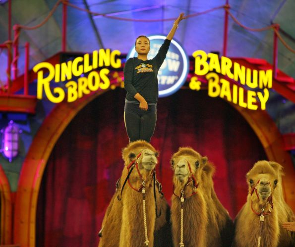 Ringling Bros. circus shifts winter home from Tampa fairgrounds to Ellenton