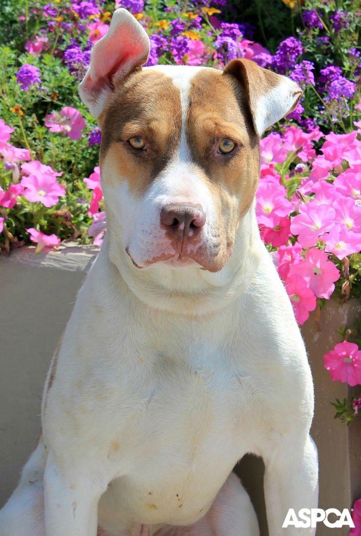 113 best pet care tips images on pinterest pet care pet health