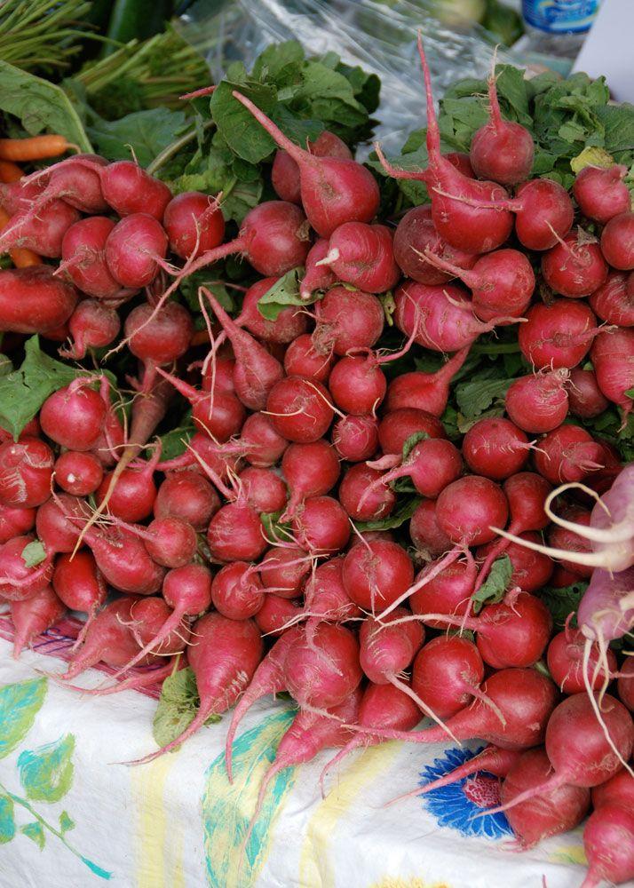 Information On Growing Radishes Growing Radishes Greenhouse