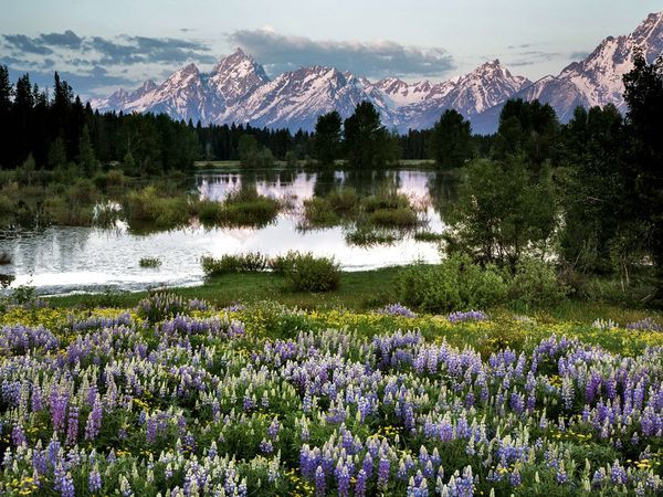 as beautiful as the Grand Tetons are in summer, they are equally beautiful in fall when we were there.
