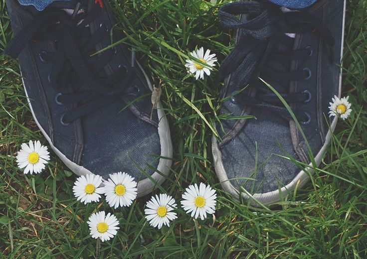 Sneakers shoes Canvas shoes  Sneakers shoes on green grass and daisies. Hipster Conceptual photo