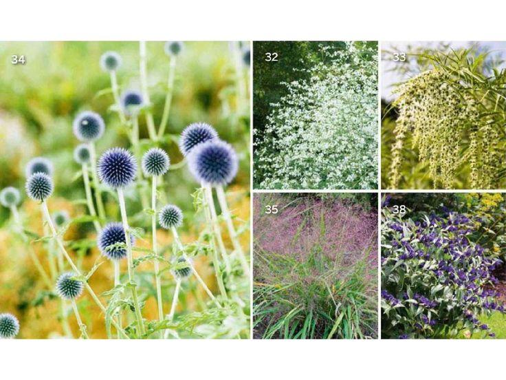 Publicado en Gardens Illustrated Compartido en El Blog de La Tabla www.elblogdelatabla.com
