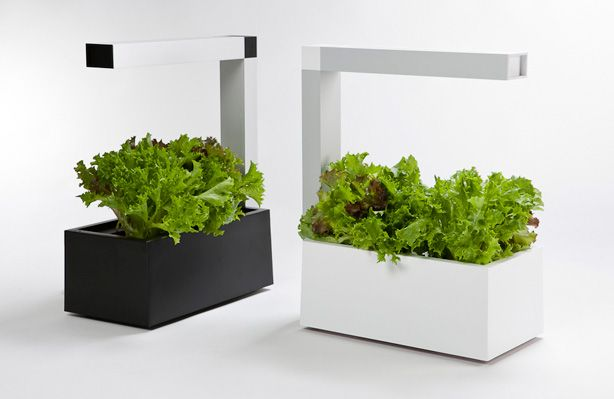 Using a combination of #hydroponics and intensive energy-efficient lighting, Indoor Garden Herbie gives apartment dwellers the gift of a garden.  #indoorgardens