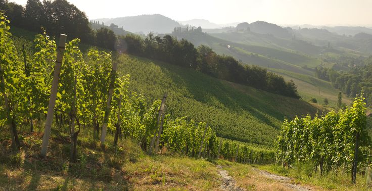 """Die Einzellage """"Hochsulz"""" des Weinguts SKOFF ORIGINAL"""