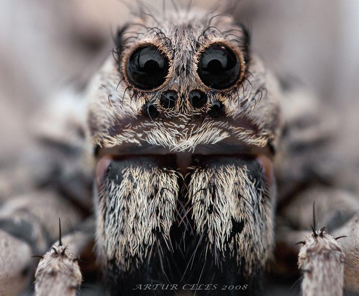 Gorgeous eyelashes tarantula buddy.
