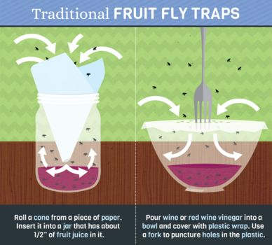 Best fruit fly trap how did they get in here