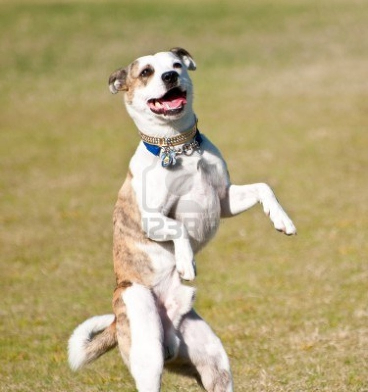 P In Dog Training