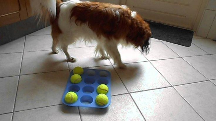 Denkspelletjes voor de hond alleen maar te koop en duur? Welnee. Gewoon een muffinvorm en (tennis)ballen. (Idee opgedaan via www.hersenwerkvoorhonden.nl)