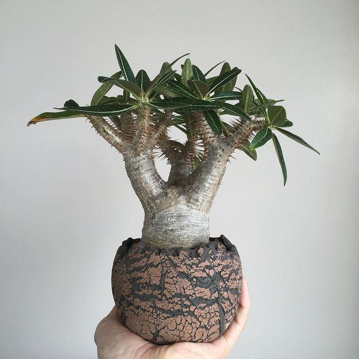 1000 ideas about Cactus Types on Pinterest Zinnias