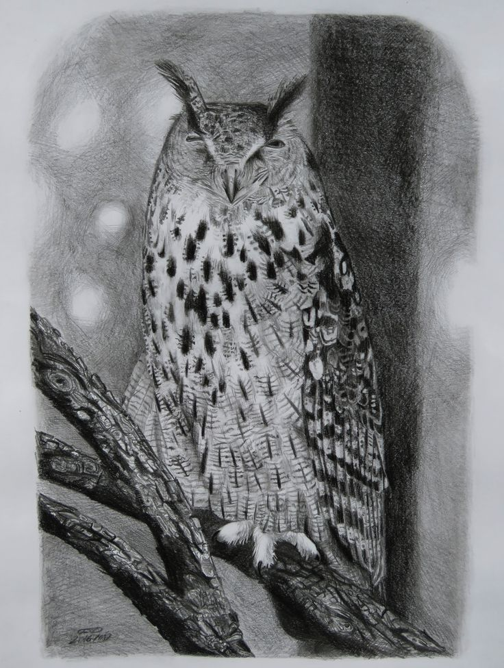 Eurasian eagle owl - B/4 size / graphite pencil drawing animal bird /