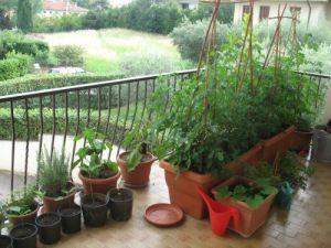 Vorreste verdure e aromi freschi sempre pronti a casa vostra? Come Fare? Perchè non creare un orto in terrazzo? Ecco i nostri consigli per crearlo!