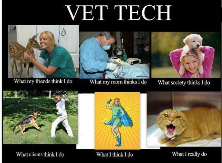 Best Vet Tech Images On   Veterinary Medicine