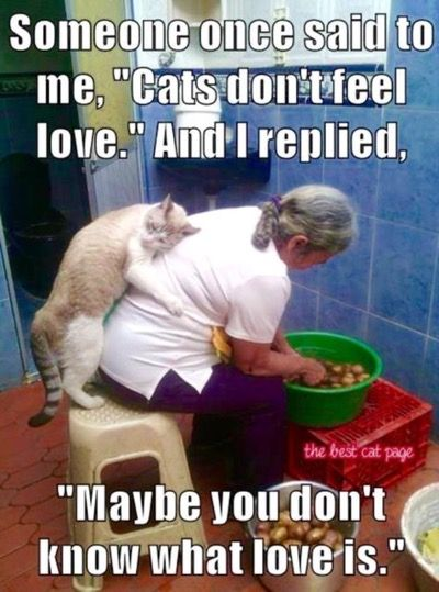 Very true! The love between owner and cat, its amazing ❤ they're unconditional love is the best feeling in the world