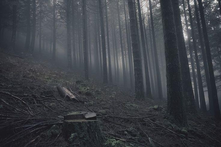Туманный лес острова Мадейра, пропитанный пустотой и тихим дыханием деревьев
