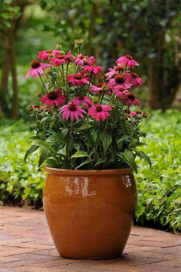 323 best container gardening images on pinterest | flower