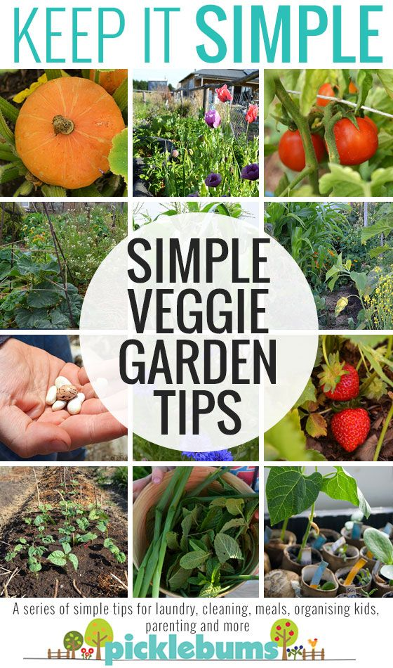 Simple tips for growing a great veggie garden... even if you don't have green thumbs or loads of time