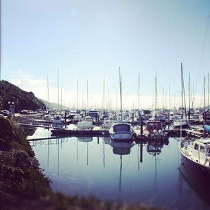 waikawa marina, picton nz