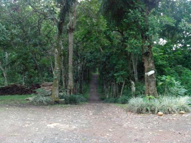 Hutan Wisata Gunung Bromo. Karanganyar. Jawa Tengah Indonesia.