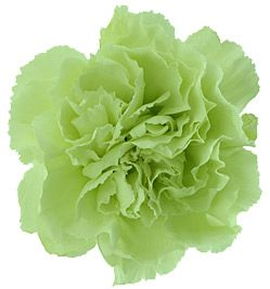 jade carnations are becoming more popular along with dark purple carnations.
