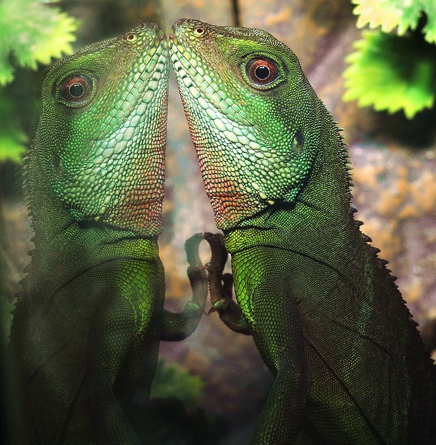 17 Best Ideas About Chinese Water Dragon On Pinterest