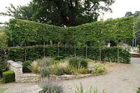 trees hedges underplanting - Google Search