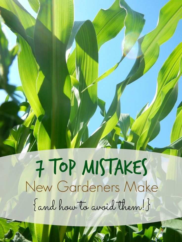 7 Top Mistakes New Gardeners Make (and how to avoid them)