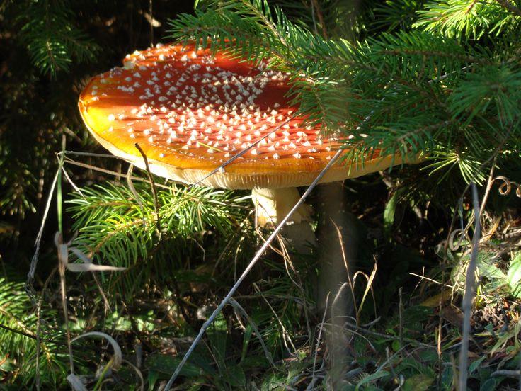 Piękny - efekt listopadowego spaceru po lesie.