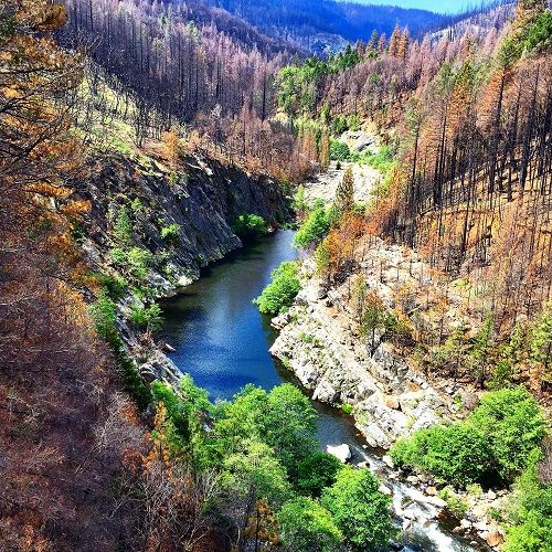 Rubicon River from 11 Pines Rd. bridge showing how 2014 King fire consumed timber on both sides of the river.