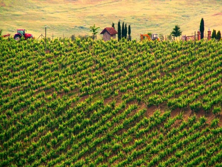 Sample Italian Chianti in the vineyards of Tuscany.