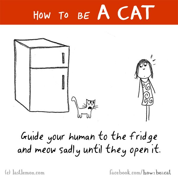 HOW TO BE A CAT: Guide your human to the fridge and meow sadly until they open it.