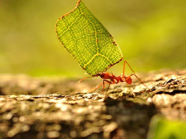 Les fourmis ont la désagréable habitude de se déplacer en nombre et il n'est pas toujours facile de chasser ces petits insectes qui colonisent en un rien...