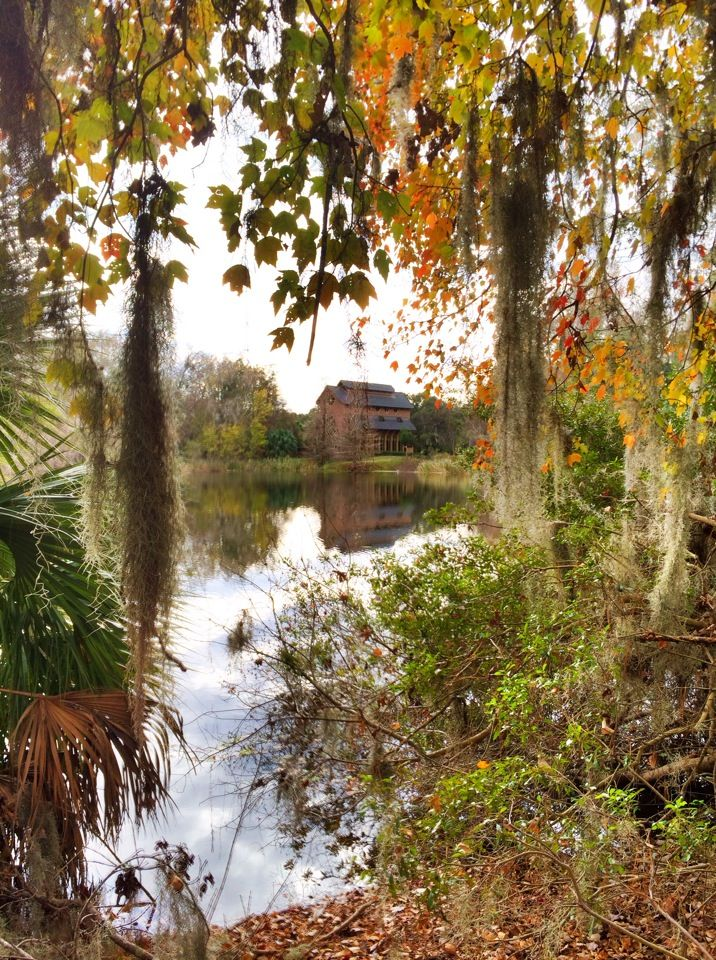 Lake Alice! Explore Gainesville, home of the University of Florida!