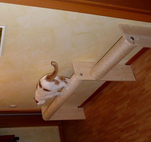 Raumspar-Catwalk - Katzen Forum