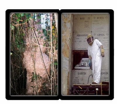The value of a live Bee Removal Boca Raton Florida and other options such as obtaining a keeper doing the activity yourself may be the best. Bee Removal Boca Raton Florida to do a live bee removal: Price, Feasibility, and insect conservation the advantages of a live bee removal are most effectively.Visit our site http://www.hotfrog.com/Companies/Alpine-Farms-Bee-Removal_30712626 for more information on Bee Removal Vero Beach Florida