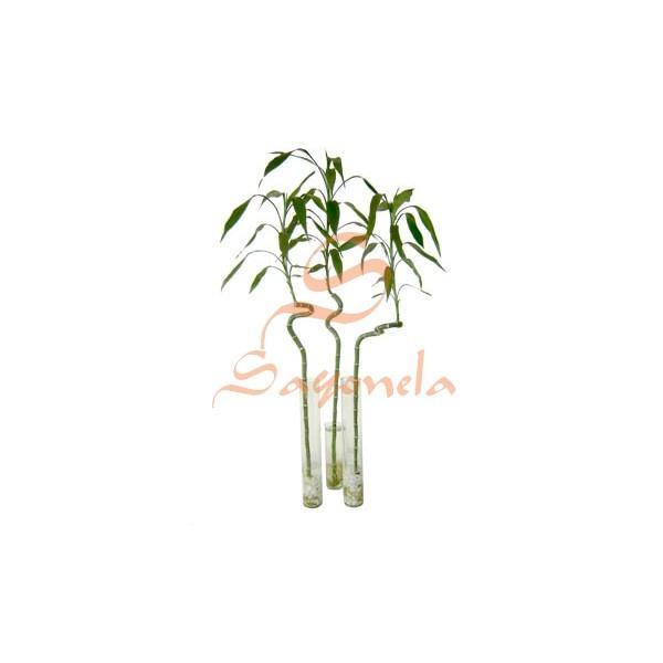 Arreglo:        Lucky Bambú (unidad)      Base en tubo de vidrio