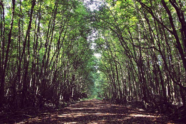 Cần Giờ Mangrove Forest
