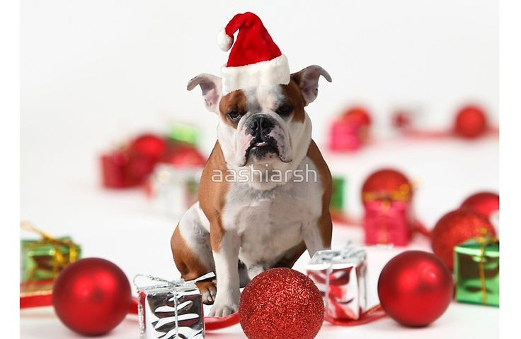 #Bulldog #Christmas Gift Box #Ornaments Red #Santa #Hat #offer #sale 20% OFF use code twentyoff