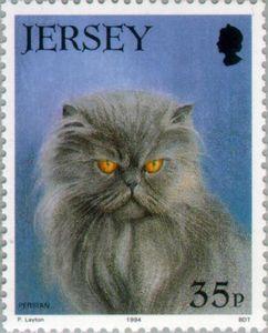 Persian Cat (Felis silvestris catus)