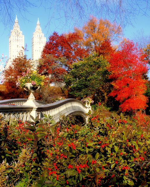 Autumn Morning in Central Park, New York