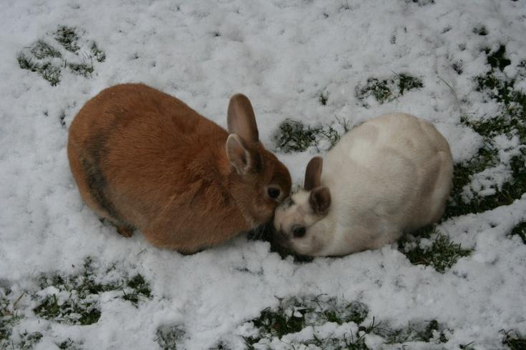 Konijntjes in de sneeuw!