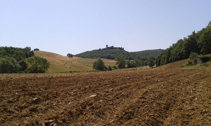 A Trequanda, nella piccola frazione di Castelmuzio si trova la sede dell'azienda Agricola Coste sulle pendici della collina del Lecceto, in posizione soleggiata e ben riparata dalle avversità atmosferiche, con panorami mozzafiato sul Monte Amiata,Montalcino, Sant' Anna in Camprena, Pienza. L'azienda, capofila dei Sapori dei 30, è una piccola azienda a carattere familiare.