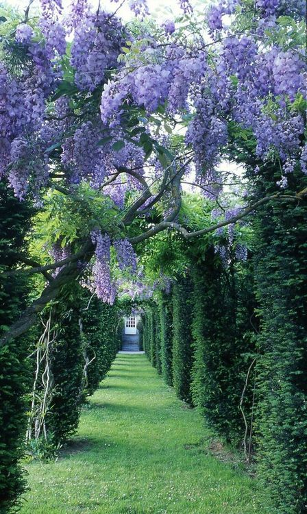 Wisteria love. (1) From: Little Secret Garden (2) Follow On Pinterest > Home under the Stars