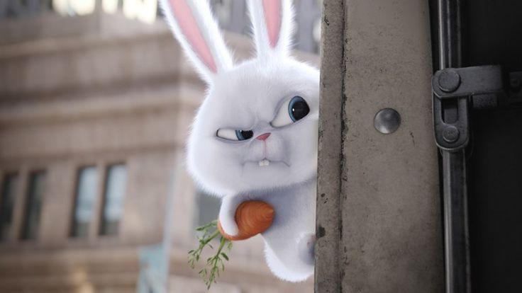 Conoce más de Snowball de La Vida Secreta de Tus Mascotas - https://webadictos.com/2016/07/25/snowball-la-vida-secreta-tus-mascotas/?utm_source=PN&utm_medium=Pinterest&utm_campaign=PN%2Bposts