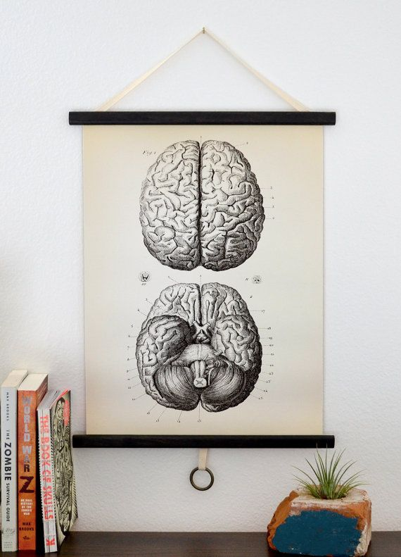 Medium Vintage Anatomy Pull Down Chart Reproduction. Brains Human Body Biology Educational Diagram Poster - CP102CV