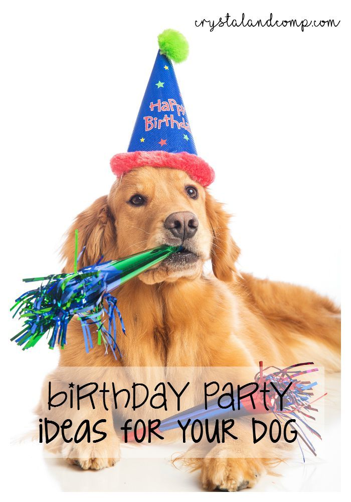 birthday party ideas for your dog