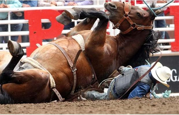 17 Best Images About Rodeo Tough On Pinterest Virginia