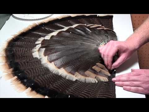 How To: Mount a Turkey Tail Fan and Beard (3 of 3) - YouTube